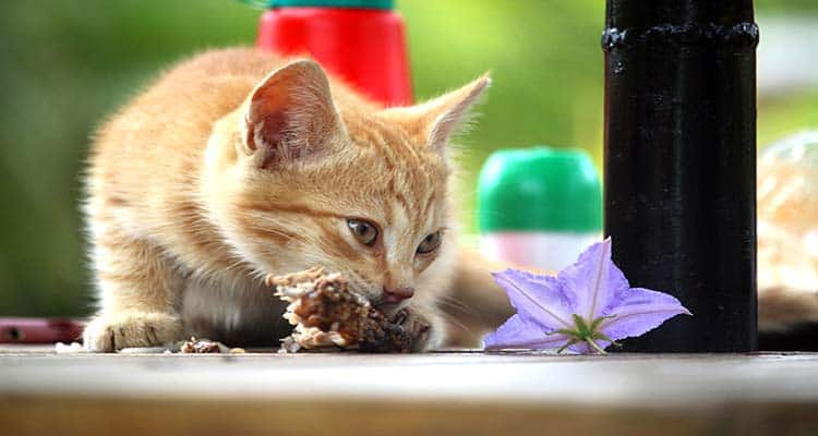Best High Protein Dry Cat Food