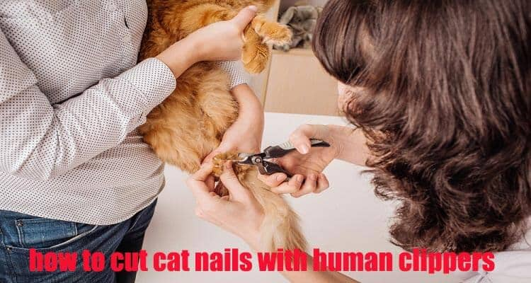 How to Cut Cat Nails With Human Clippers
