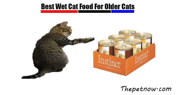 7 Best Wet Cat Food For Older Cats
