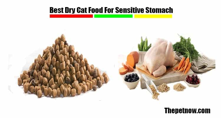 Best Dry Cat Food For Sensitive Stomach