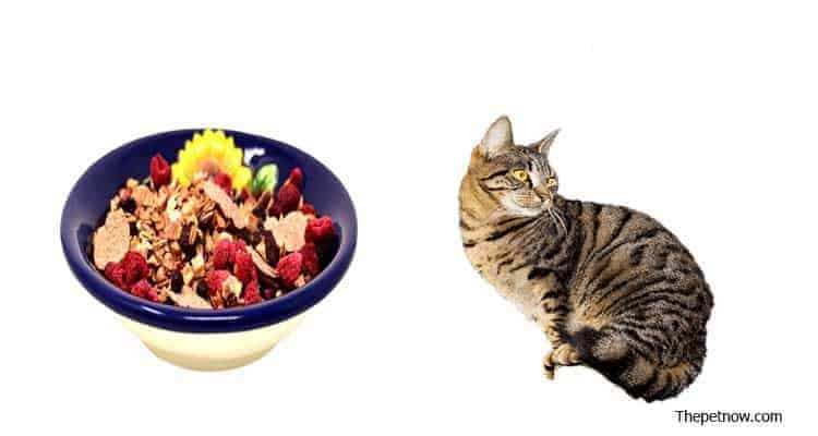 Halo Cat Food Reviews