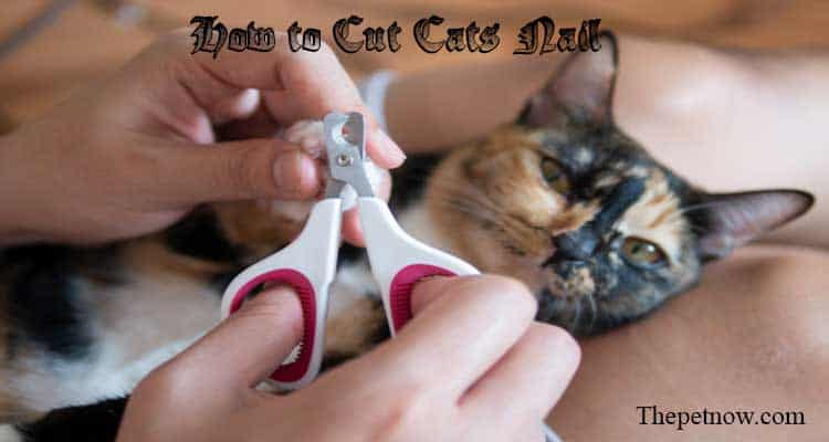 How to Cut Cats Nail
