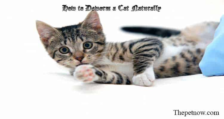 How to Deworm a Cat Naturally
