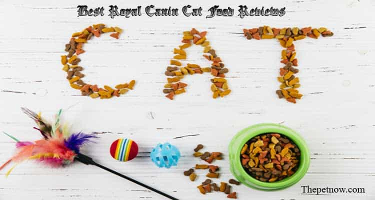 Royal Canin Cat Food Reviews