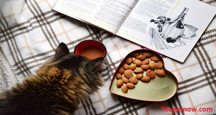 Tiki Cat Food Reviews