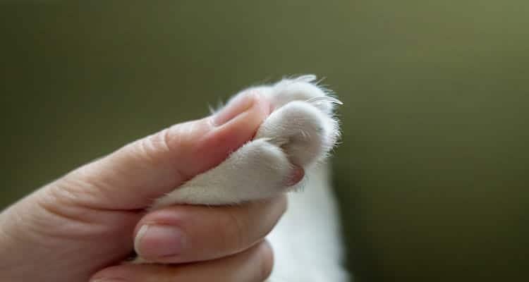Cat Nail CLIPPER Or Nail GRINDER