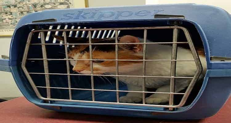 How Much is a Cat Carrier