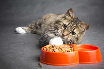 What Is The Best Canned Cat Food