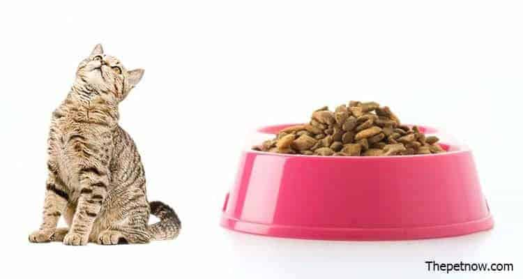 Avoderm Cat Food Reviews