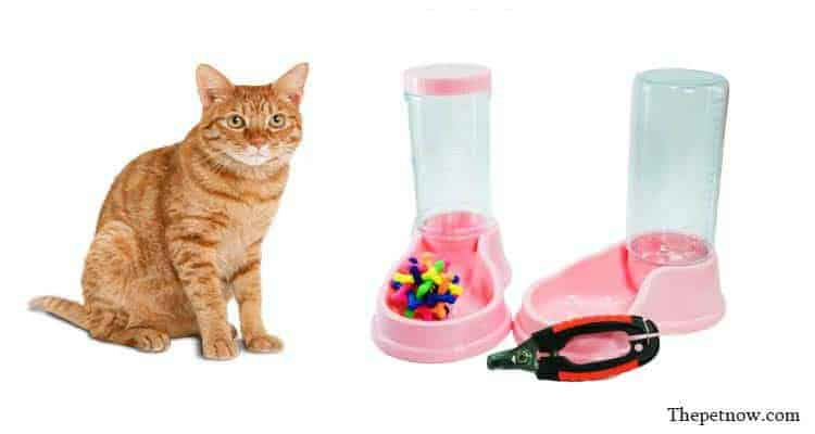 best slow feeder for cats