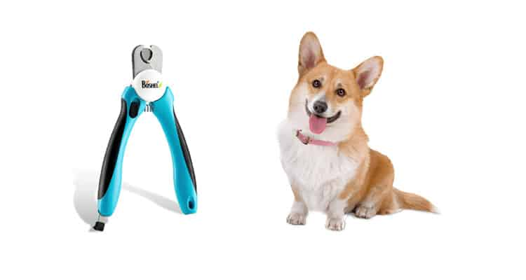Best Dog Nail Clippers For Black Nails