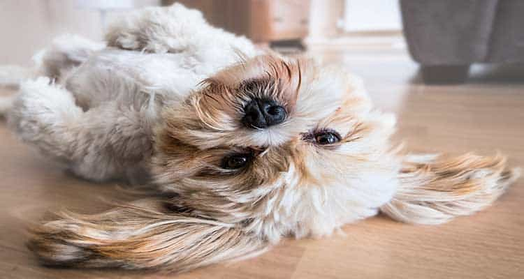 How Can You Treat Your Dog's Hair Loss