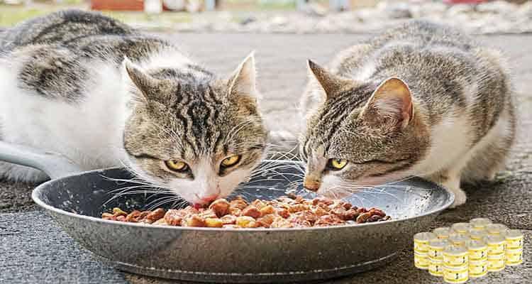 Weruva Cat Food Reviews