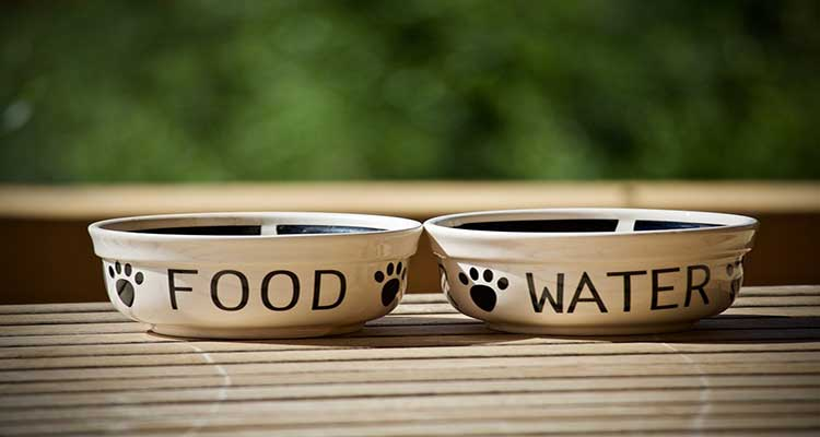 Best Cat Water Bowl