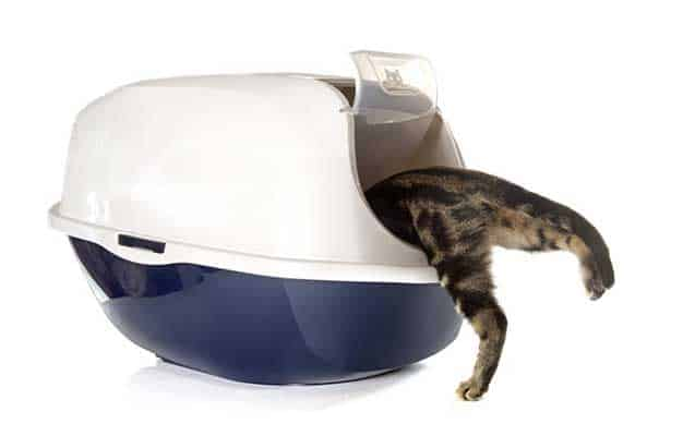 How to Hide Cat Litter Box