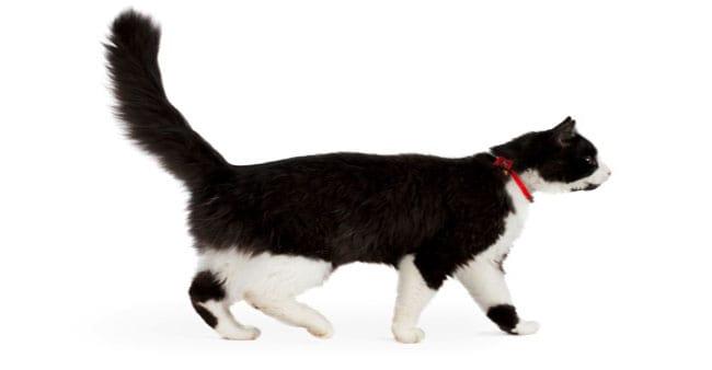 How Do Cat Flea Collars Work