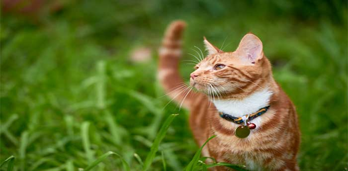 How Long Does It Take for a Flea Collar to Work