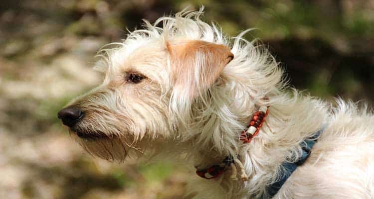 What are the Different Symptoms of Flea Collar Poisoning